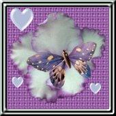 butterflyplaque